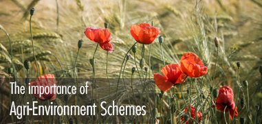 The importance of Agri-Environment Schemes