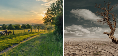 Climate change adaptation is key to the future of European agriculture