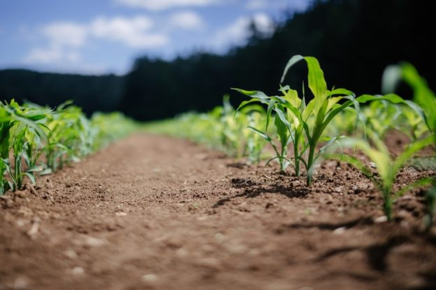 EU and US agriculture managers face each other over the role of innovation in sustainable agriculture